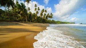 ocean beach sea shore tropical palm trees 1920x1080 wallpaper_www.wall321.com_49 - wall321
